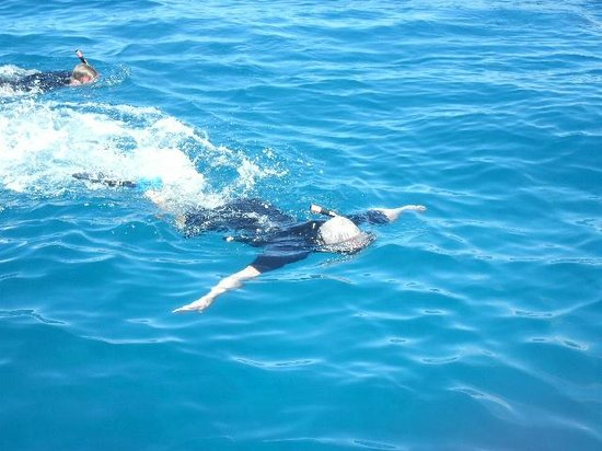 Redline Rafting Co.: Hubby actually swimming with the dolphins! Lucky!