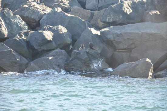 Cat Balou Cruises: Seals on the rocks