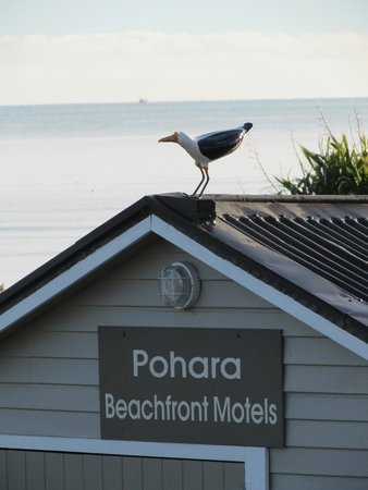 Pohara Beachfront Motel : Quirky feature