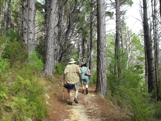 Queen Charlotte Track : On the Track