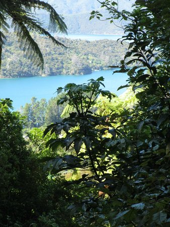 Queen Charlotte Track : The View