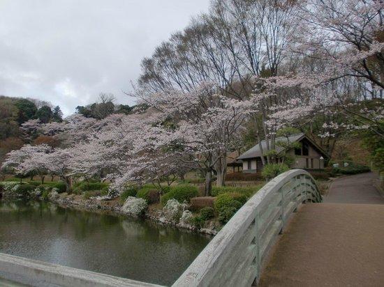 Yakushiike Park照片