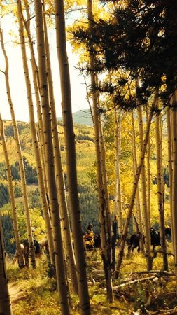 Fantasy Ranch Outfitters: Beautiful aspens