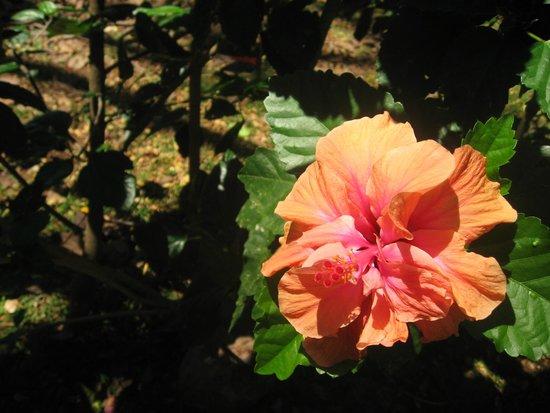 Maire Nui Botanical Gardens : flower
