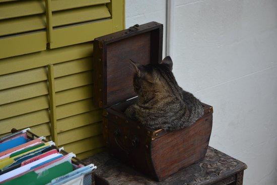 Maison d'Ernest Hemingway : Cat in a box