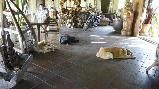The Kampung Resort Ubud: reception area full of dogs