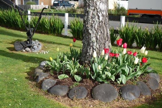 Settlers Motel: Tulips