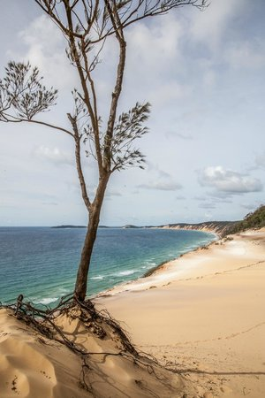 Noosa 4WD Eco Tours - Day Tours: Looking south to Double Island Point from Carlo sand blow