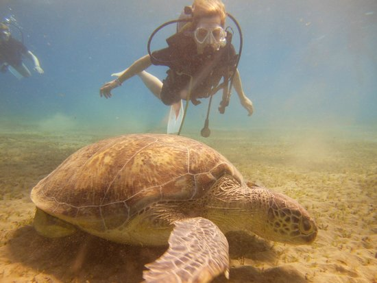 New Son Bijou Diving Center: our first turtle - Hurghada