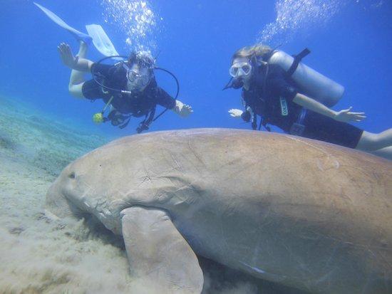 New Son Bijou Diving Center: Dugong :) - Marsa Alam