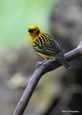 Sachatamia Lodge: bird 1