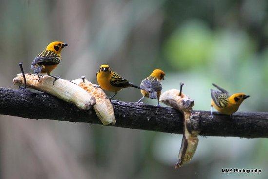 Hostería Sachatamia: bird 3