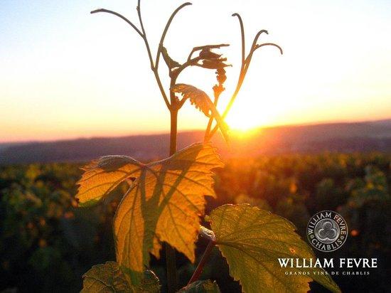 William Fevre Grands Vins De Chablis