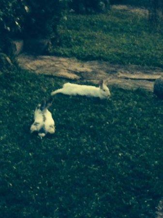 Cristal da Terra Pousada: coelhos