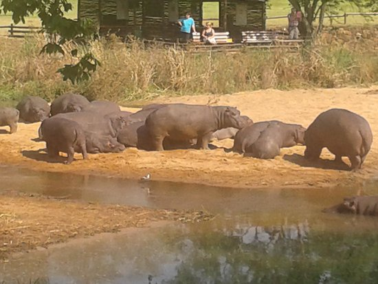 Sabi River Sun Resort : Hippo's at rest