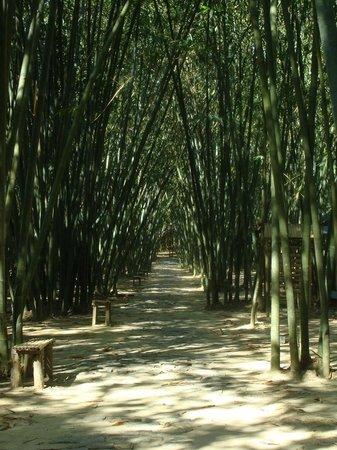 Province de Khanh Hoa, Vietnam: Bamboo forest