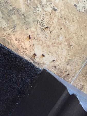 Alexis Park Resort: Bugs bugs bugs!