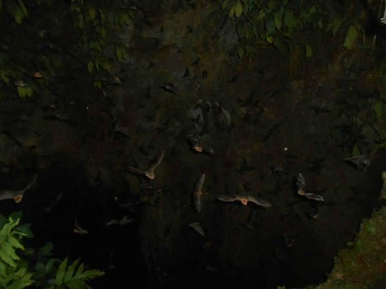 Limeland Tours: Tamana Bat caves