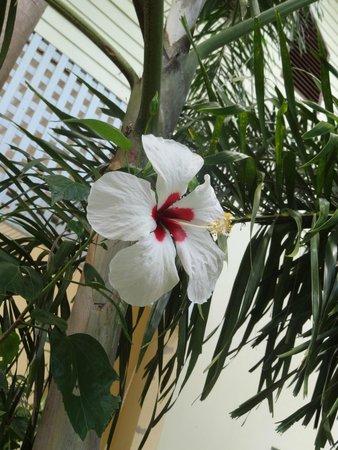 Chang Cliff Resort: el hotel está inmerso en la selva, lo que hace de tu estadía aún mas afrodisiaca!
