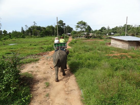Ban Chang Thai - Elephant Camp: favor no comprar marfil!