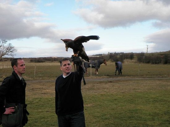 Trump Turnberry, A Luxury Collection Resort, Scotland: more Falconry