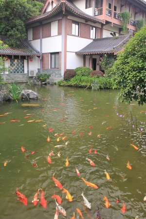 Guilinyi Royal Palace: Koi fish pond adjacent to the hotel restaurant