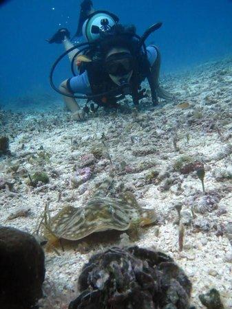 NIrvana Diving School: Mantarrayita