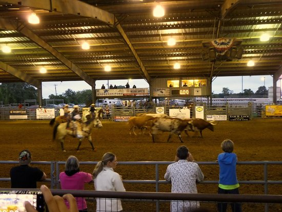 Horses Ass Picture Of Tejas Rodeo Company Bulverde
