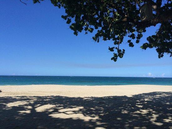 Blue JackTar: Beach View
