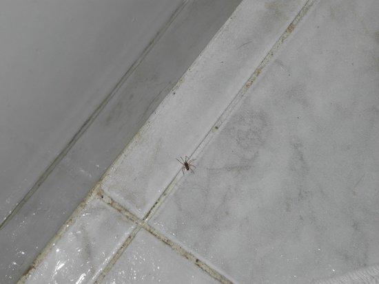 Hotel Columbia: ragno in bagno