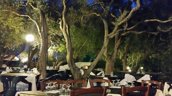 Camping Maddalena: Schöne alte Bäume....