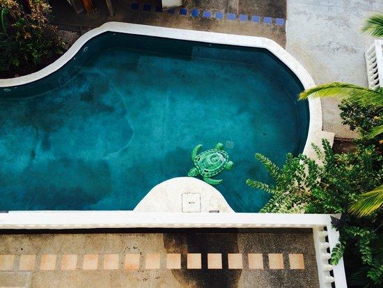 La Colina: The glorious pool
