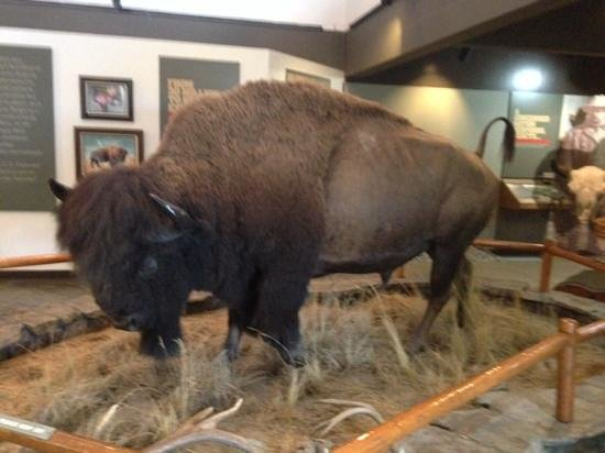 National Bison Range: visitor Center