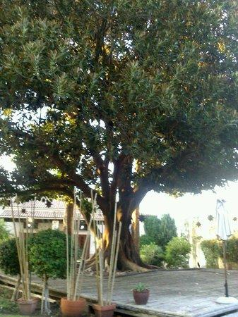 Hotel Vita Palmera Plaza: Jardin