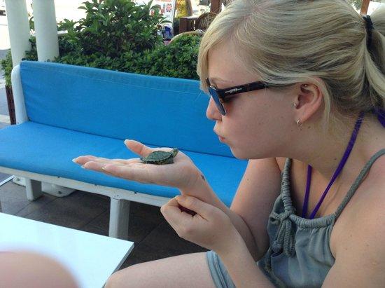 Ago Travel Day Tours: Adorable turtles!