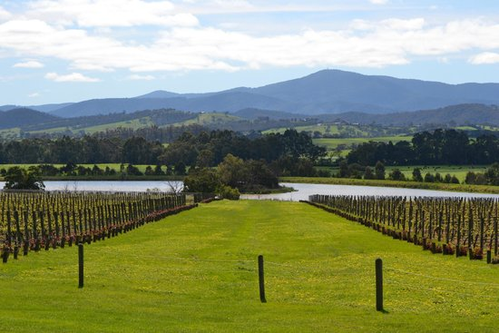 Chillout Travel Winery Tours: Chandon Domain
