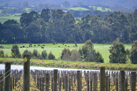 Chillout Travel Winery Tours: Yering Station