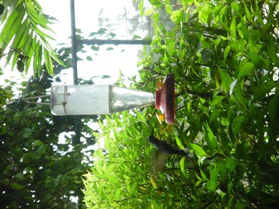 Hotel BellBird : Humming bird at side garden next to the breakfast room
