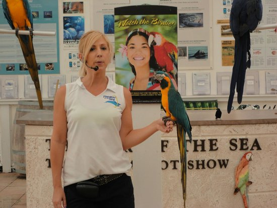 Theater of the Sea: Parrot Show 2