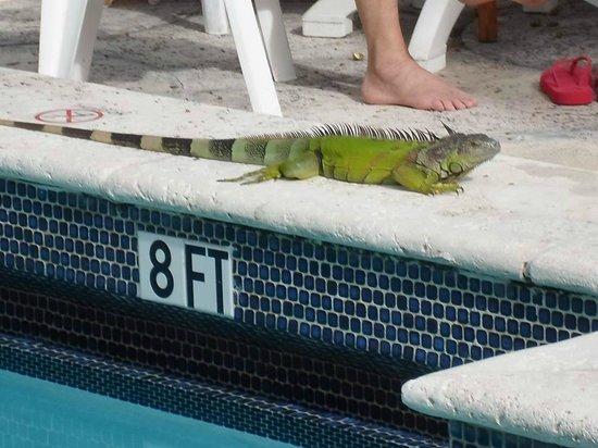 Richmond Hotel: Cool visitors at teh pool