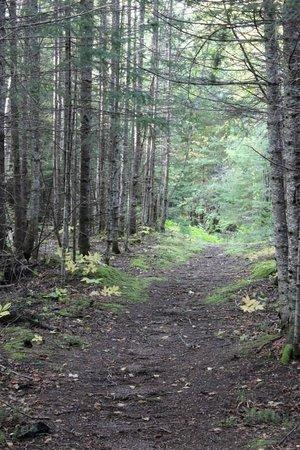 Cascade Lodge: The Trails