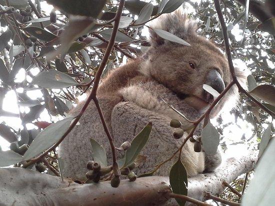 Searenity Holiday Accommodation : Furry friend