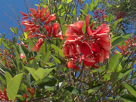 Posada Aguape: Feliz Primavera!!!