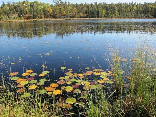 West Hawk Lake : Lily Pond Hwy #44