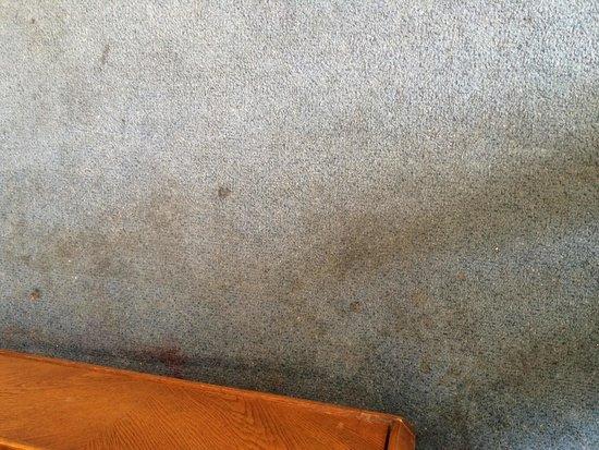 Good Nite Inn Buena Park: Carpet had numerous stains