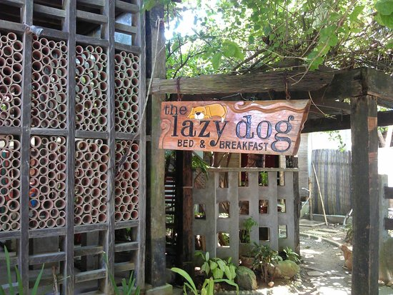 Lazy Dog Bed & Breakfast: Street View of Entrance