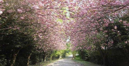 Boyne Valley Hotel & Country Club: Cherry Blossom Avenue