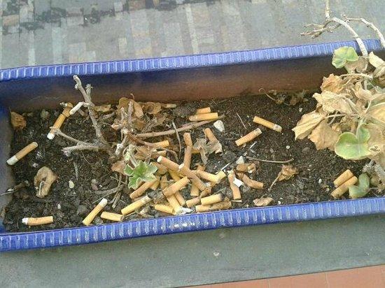La Casa Azul: plantenbak