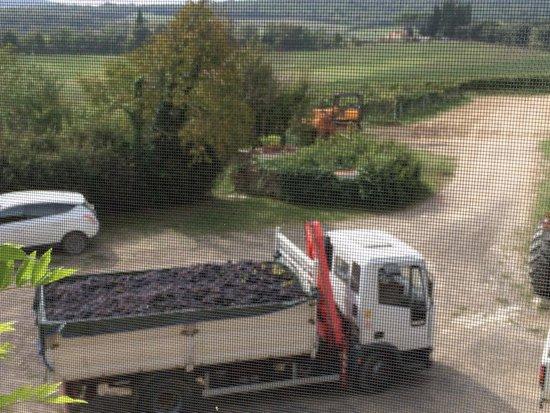 Tenuta di Corsano: View from the window - collecting grapes