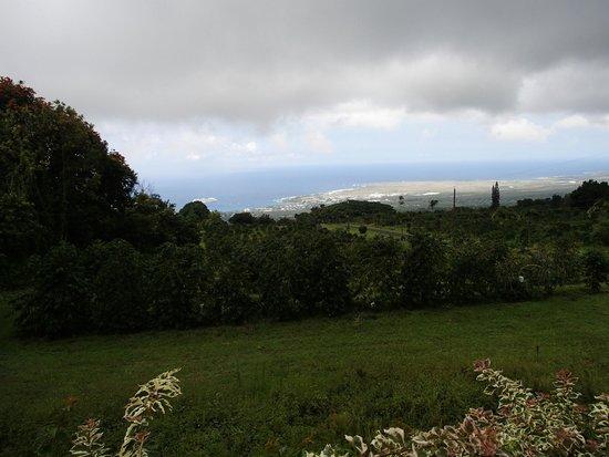UCC Hawaii Kona Coffee Estate : 農園からの眺め